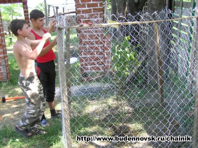 Ставим ограду на орех