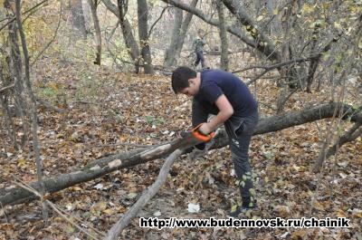 Толик пилит дерево